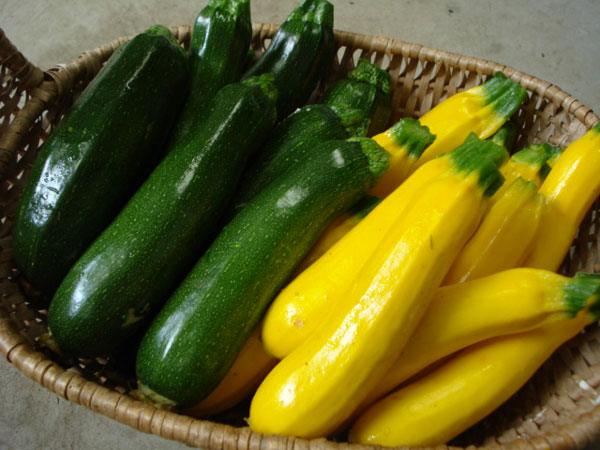 7 reasons of zucchini nutrition to prevent lifestyle diseases